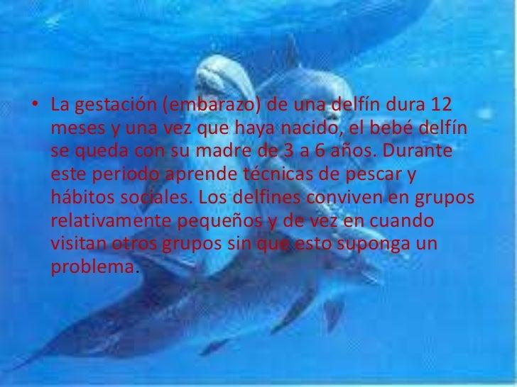 Bienvenidos al nuevo foro de apoyo a Noe #239 / 27.03.15 ~ 30.03.15 - Página 2 Los-delfines-8-728