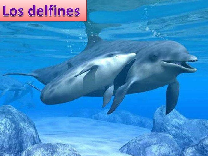 DEFINICIÓNLos delfines son mamíferos acuáticos que habitan en casi todos los mares del planeta.Aunque viven en mar abierto...