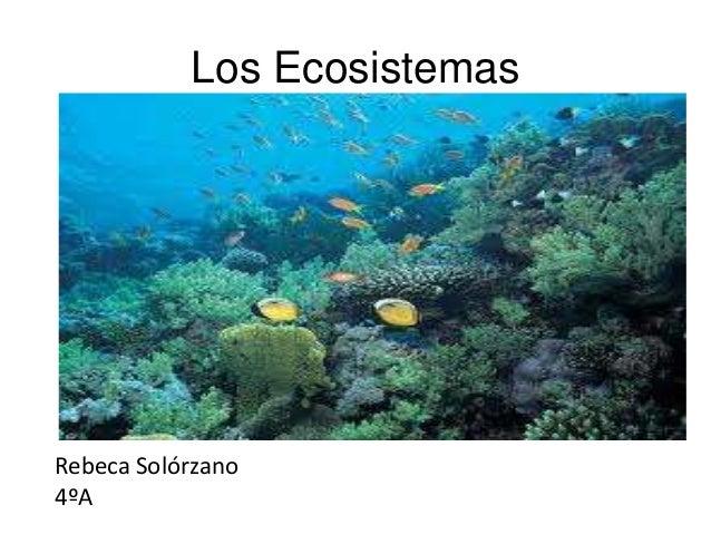 Los EcosistemasRebeca Solórzano4ºA