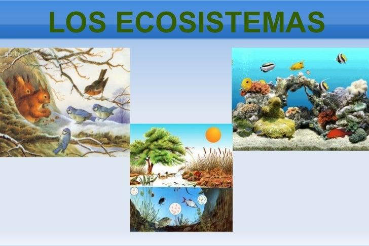 Ejemplos De Maquetas Ecosistema Terrestre | apexwallpapers.com