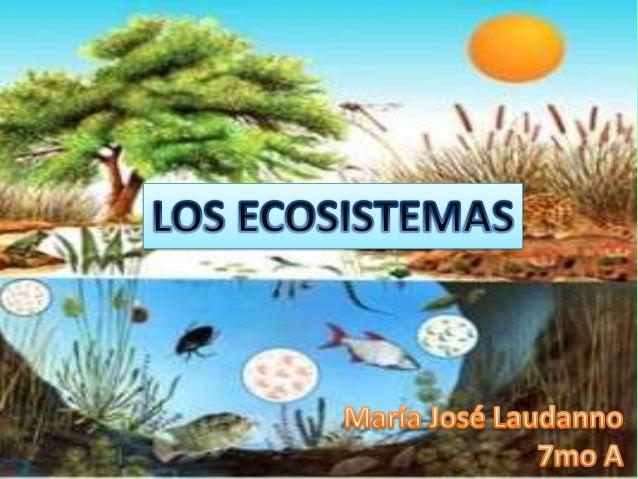 Sistema: Organización formada por distintos componentes que actúan entre si. Biocenosis: Conjunto de componentes vivos de ...
