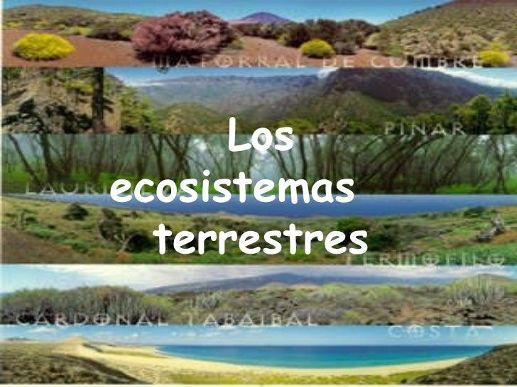 Los ecosistemas terrestres Los ecosistemas  terrestres