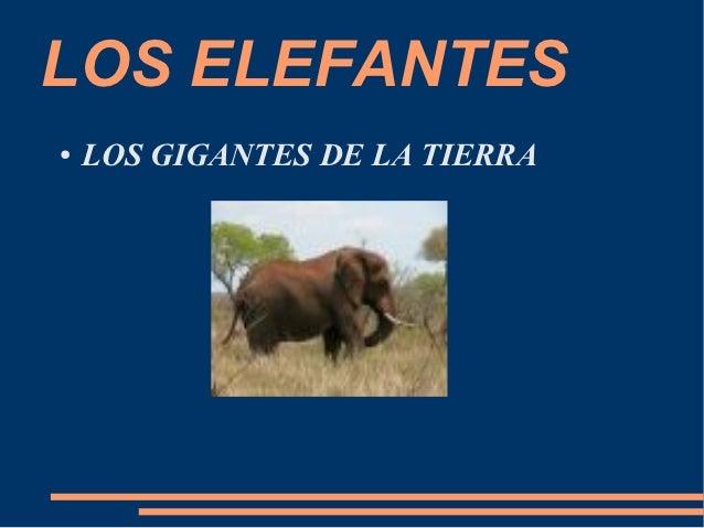 LOS ELEFANTES●   LOS GIGANTES DE LA TIERRA