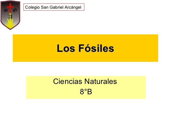 Los Fósiles Ciencias Naturales  8°B Colegio San Gabriel Arcángel