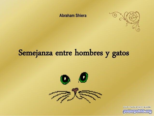 Abraham Shiera  Semejanza entre hombres y gatos