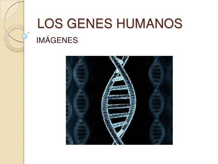 LOS GENES HUMANOSIMÁGENES
