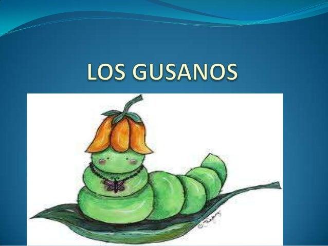  Los gusanos pueden ser acuáticos o terrestres.  ACUÁTICO  TERRESTRE