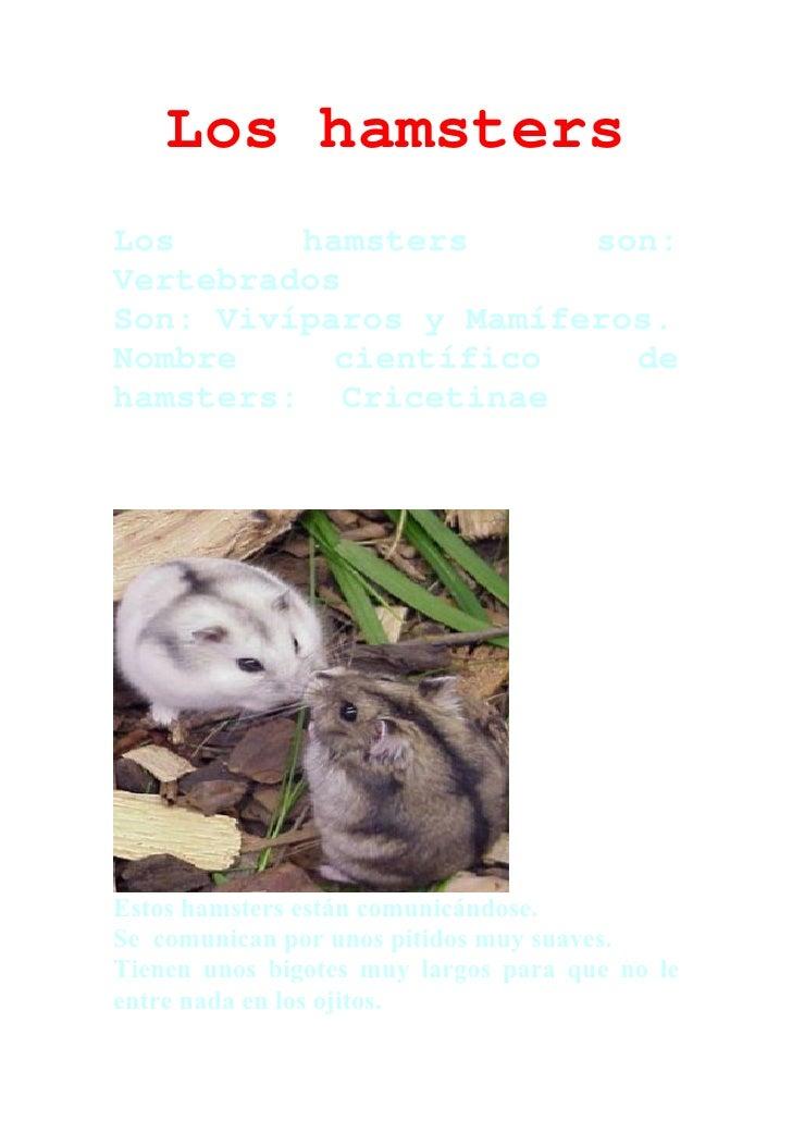 Los hamsters Los      hamsters      son: Vertebrados Son: Vivíparos y Mamíferos. Nombre     científico    de hamsters: Cri...