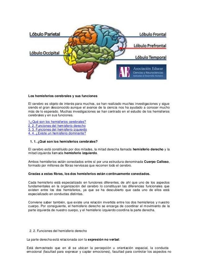 La Funci n Cerebral Y El Cerebro Humano Las Funciones Cerebrales