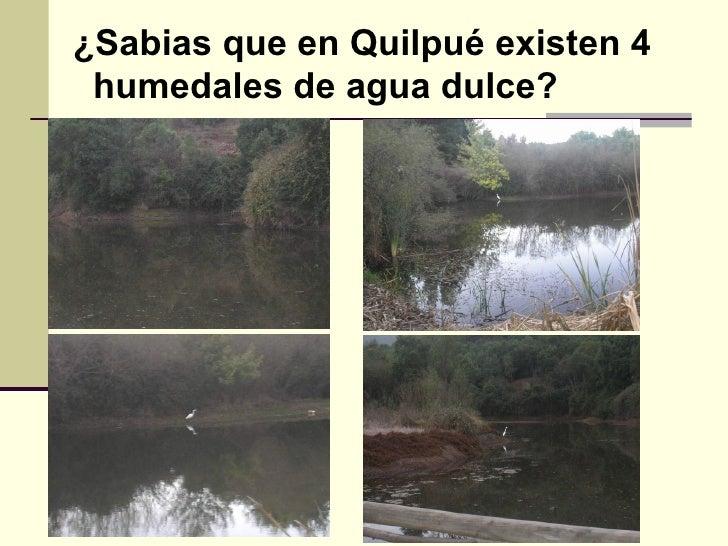 ¿Sabias que en Quilpué existen 4  humedales de agua dulce?