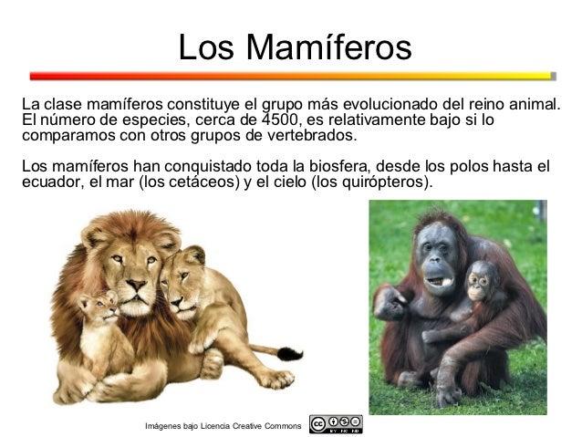 Los MamíferosLa clase mamíferos constituye el grupo más evolucionado del reino animal.El número de especies, cerca de 4500...