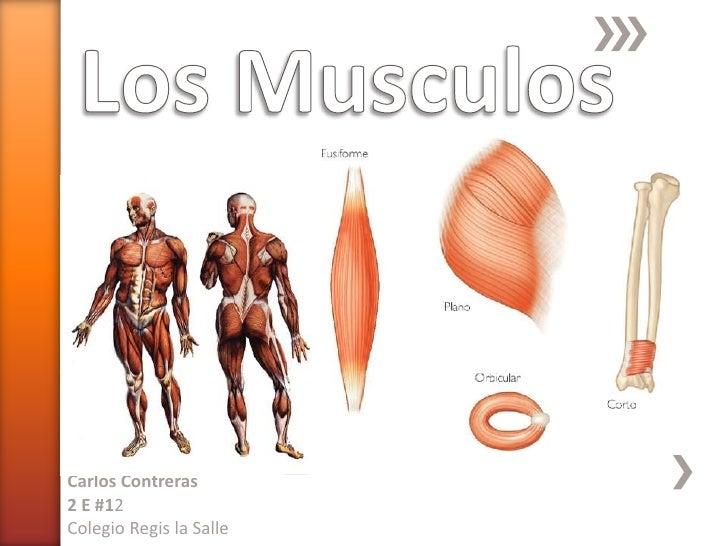 Los Musculos<br />Carlos Contreras<br />2 E #12<br />Colegio Regis la Salle<br />