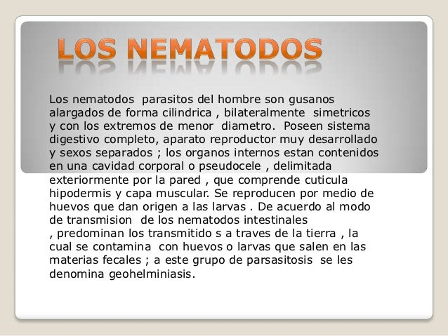 Los nematodos parasitos del hombre son gusanosalargados de forma cilindrica , bilateralmente simetricosy con los extremos ...