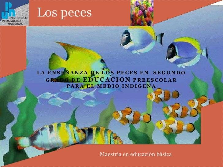 La ENSEÑANZA DE LOS PECES EN  SEGUNDO GRADO DE EDUCACION PREESCOLAR PARA EL MEDIO INDIGENA<br />Lospeces<br />Maestría en ...