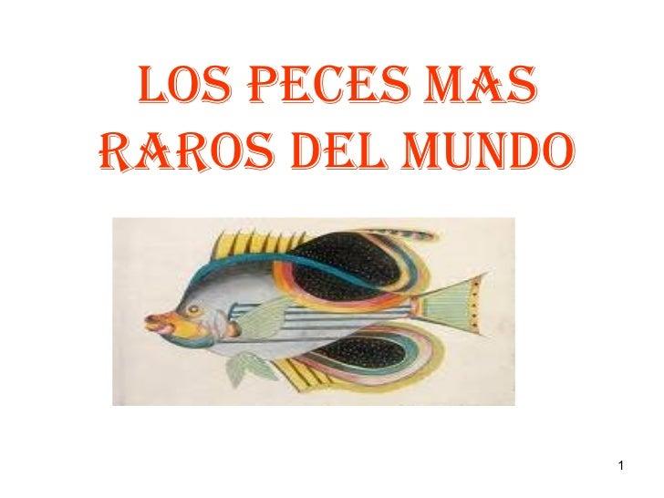 Los peces mas raros del mundo - Los peces mas bonitos del mundo ...