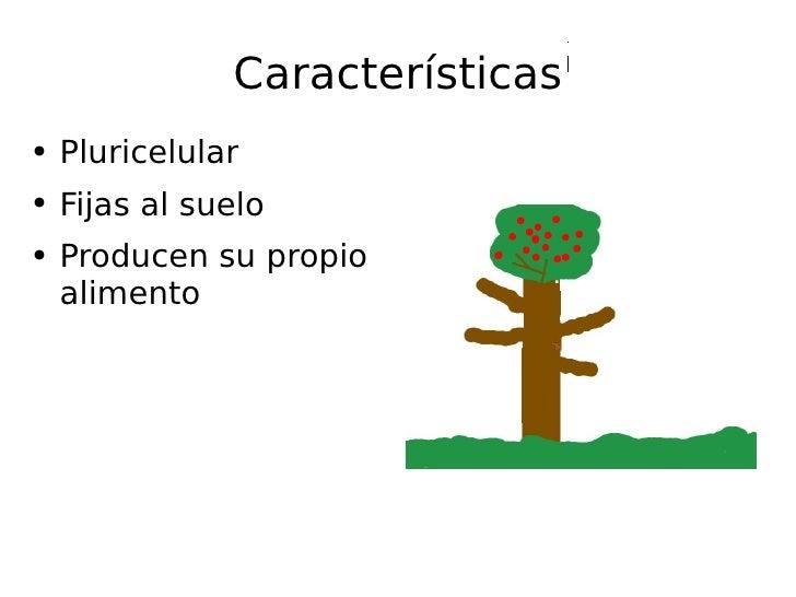 Características <ul><li>Pluricelular </li></ul><ul><li>Fijas al suelo </li></ul><ul><li>Producen su propio alimento </li><...