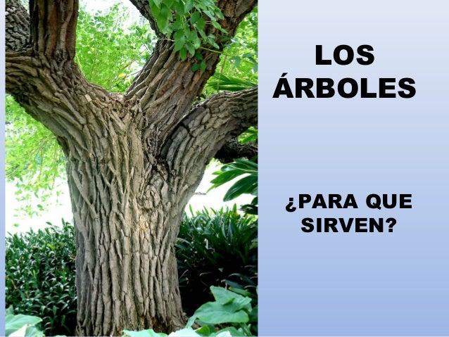 LOS ÁRBOLES ¿PARA QUE SIRVEN?