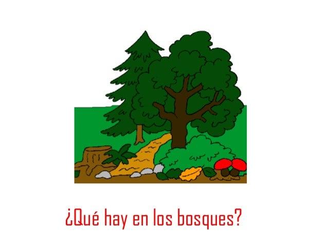 Los recursos del bosque