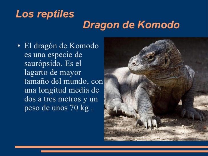 Los reptiles  Dragon de Komodo <ul><li>El dragón de Komodo es una especie de saurópsido. Es el lagarto de mayor tamaño del...