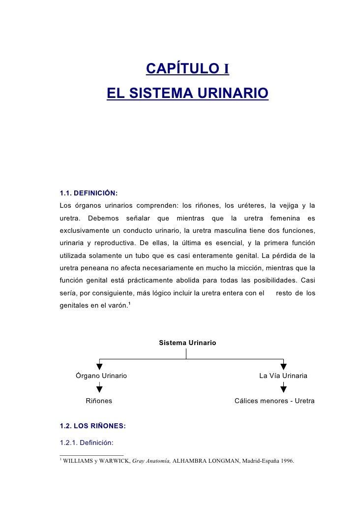 CAPÍTULO I                  EL SISTEMA URINARIO     1.1. DEFINICIÓN: Los órganos urinarios comprenden: los riñones, los ur...