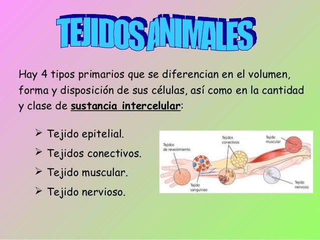 Hay 4 tipos primarios que se diferencian en el volumen,  forma y disposición de sus células, así como en la cantidad  y cl...