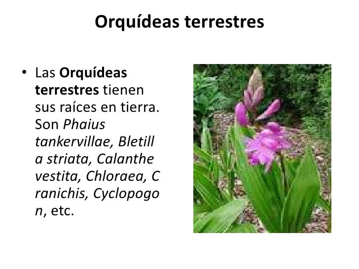 Tipos De Orquídeas auf Pinterest  Como Cuidar De Orquidea, Cuidar De
