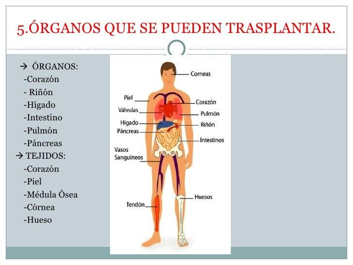 Los trasplantes - Alfombras que se pueden fregar ...