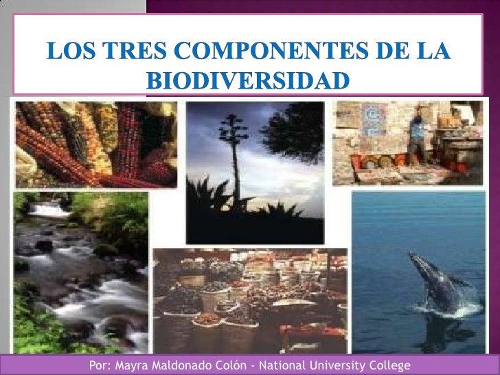 Por: Mayra Maldonado Colón - National University College