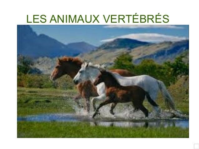 LES ANIMAUX VERTÉBRÉS