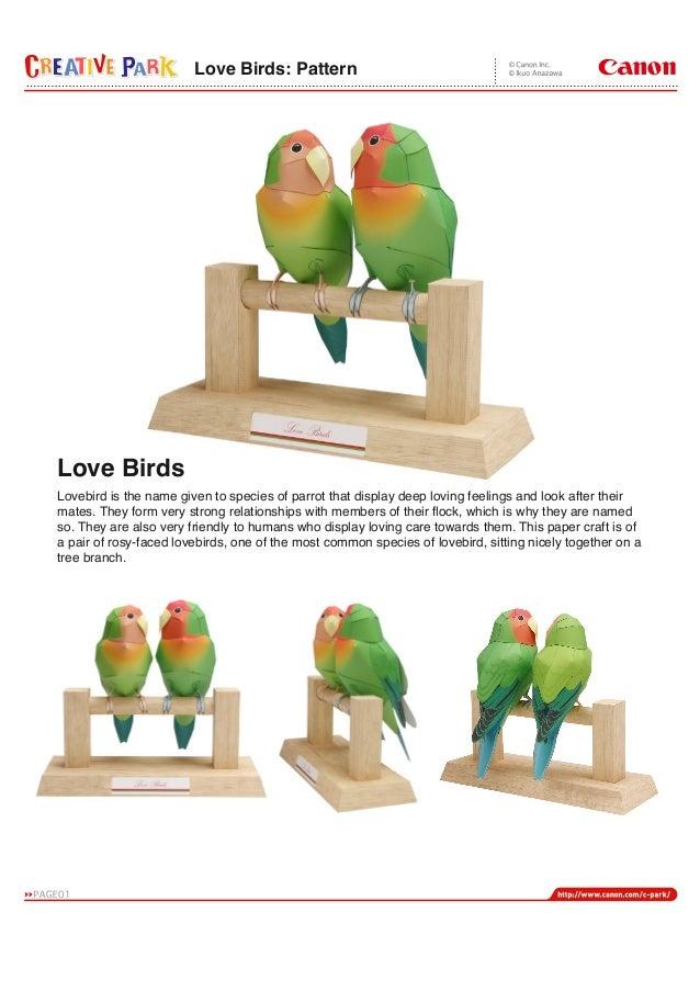 Love birds e-a4