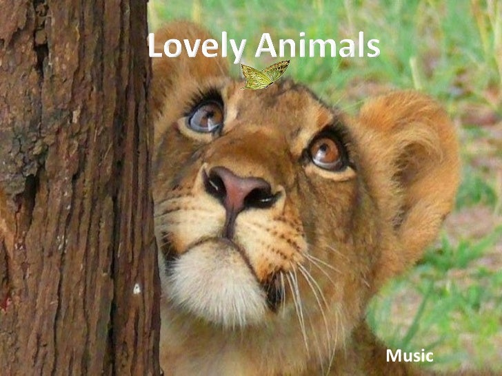 Lovely Animals (Cmp)