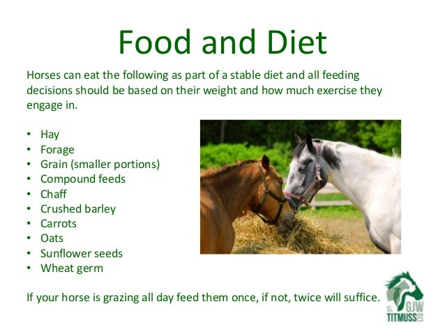 loving your pet looking after your first horse