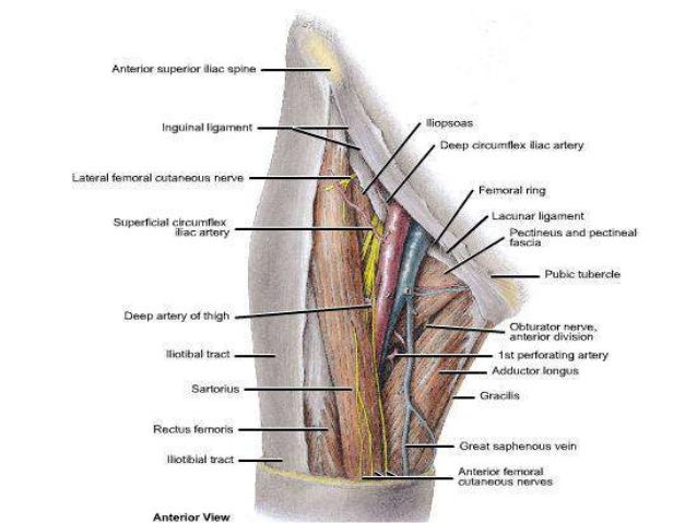 9 besides 1120 Dr Nand Lal Terminologies Anatomical Positions Anatomical Planes Terms Of Positions moreover Abdominal Wall likewise 5830133 as well Development Of The Foregut Esophagus And Stomach. on lining of the abdominal cavity