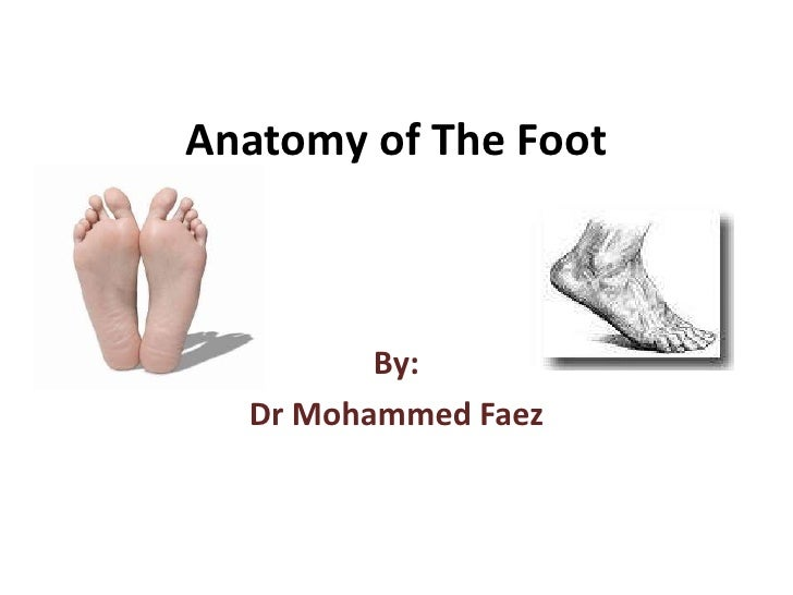 Anatomy of The Foot<br />By:<br />Dr Mohammed Faez<br />