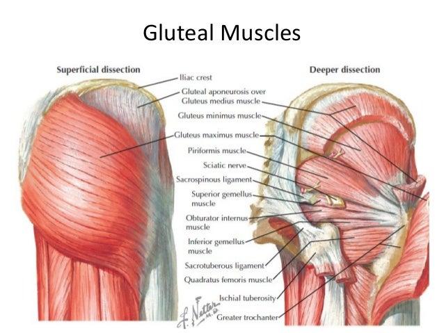 Build Muscle Medicine