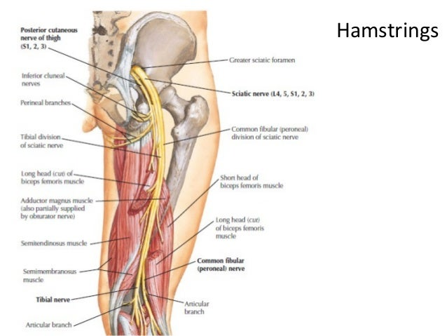 motor examination of the lower limb essay · motor arm left (raise weakness of the arm and face is usually worse than that of the lower limb delay in presentation and evaluation for.
