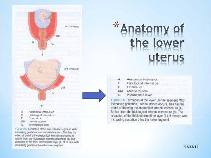 Lower Uterine Segment