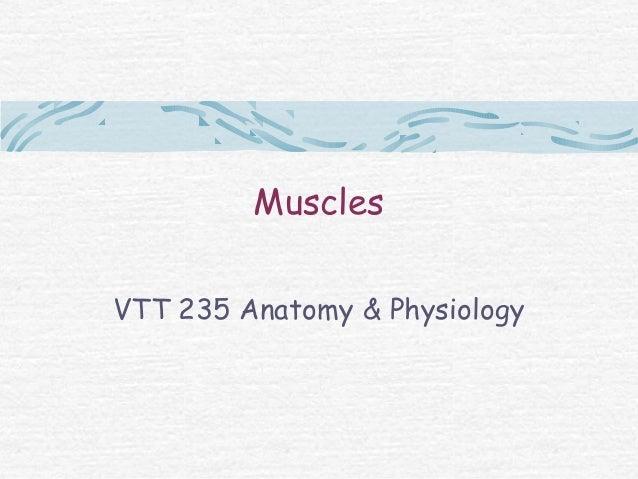MusclesVTT 235 Anatomy & Physiology