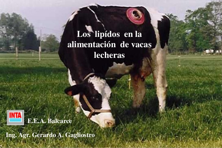 Los  lipídos  en la alimentación  de vacas lecheras<br />E.E.A. Balcarce<br />Ing. Agr. Gerardo A. Gagliostro<br />