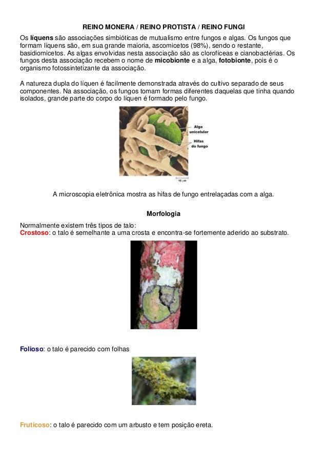 REINO MONERA / REINO PROTISTA / REINO FUNGI Os líquens são associações simbióticas de mutualismo entre fungos e algas. Os ...