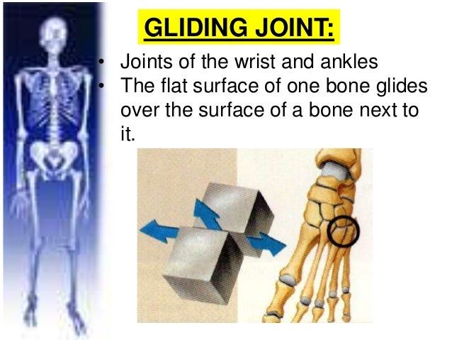 gliding joint vertebrae, Cephalic vein