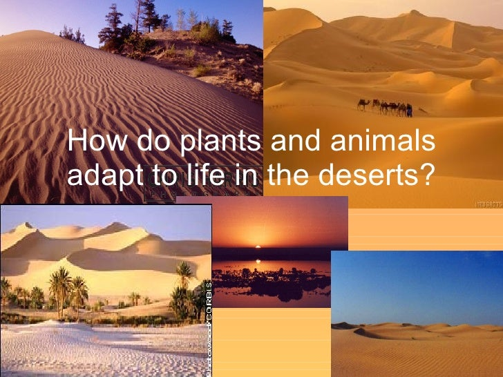 How do plants and animals adapt to life in the deserts?