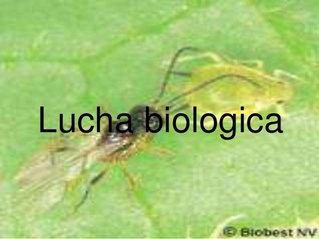 Lucha biologica