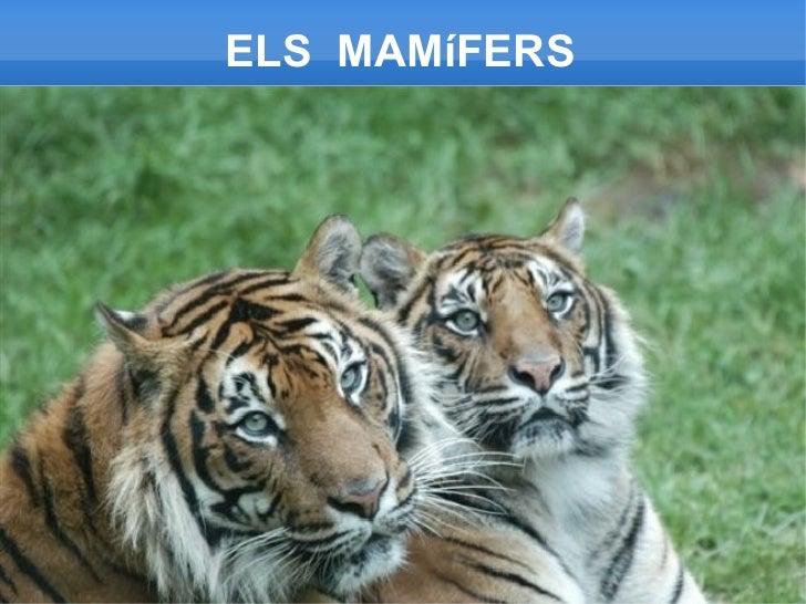 Els mamífers
