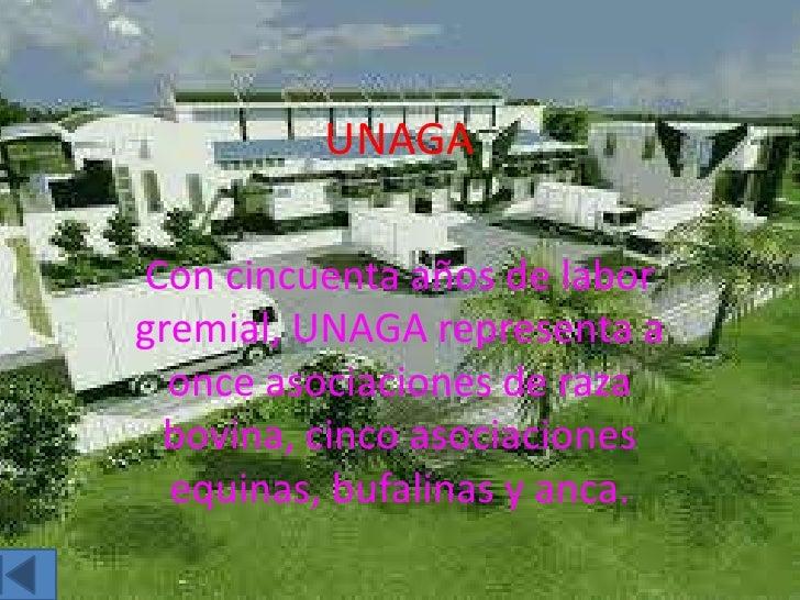 UNAGACon cincuenta años de laborgremial, UNAGA representa a  once asociaciones de raza bovina, cinco asociaciones  equinas...