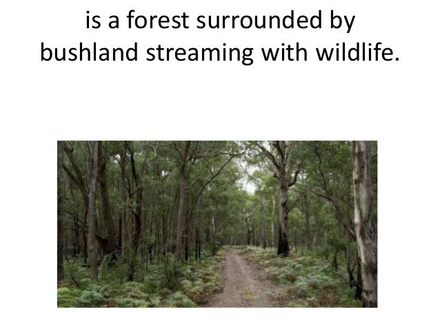 is a forest surrounded by bushland streaming with wildlife.