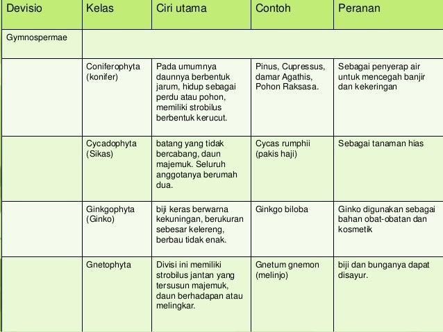 Lumut ( bryophyta)
