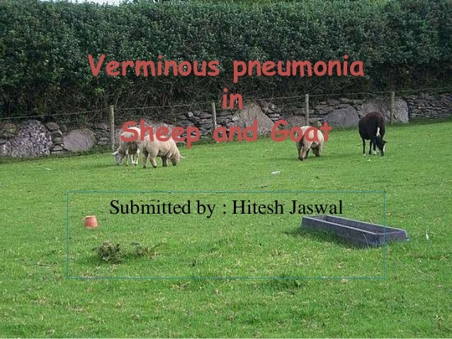 Verminous pneumonia in Sheep and Goat Submitted by : Hitesh Jaswal