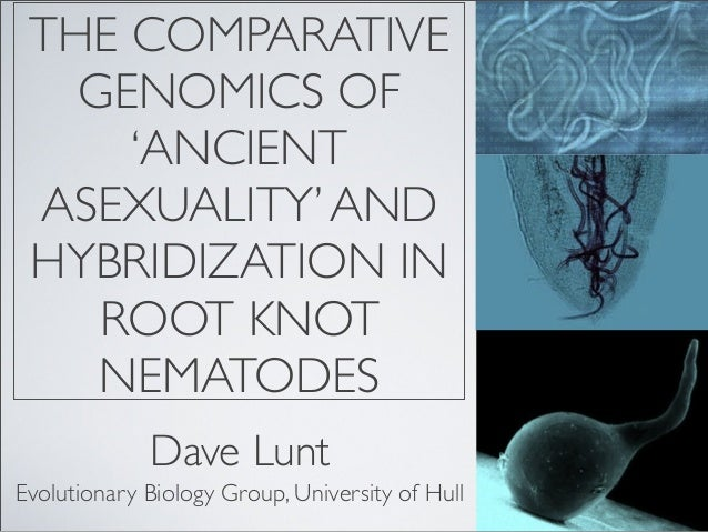 Asexuality, hybridisation and comparative genomics of root knot nemtodes