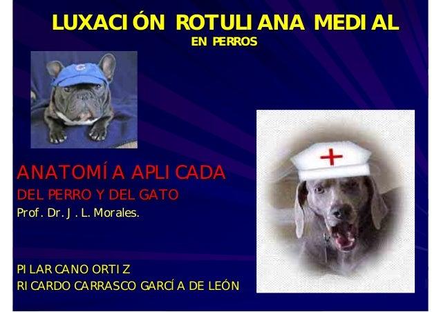 LUXACIÓN ROTULIANA MEDIAL EN PERROS  ANATOMÍA APLICADA  DEL PERRO Y DEL GATO  Prof. Dr. J. L. Morales.  PILAR CANO ORTIZ R...